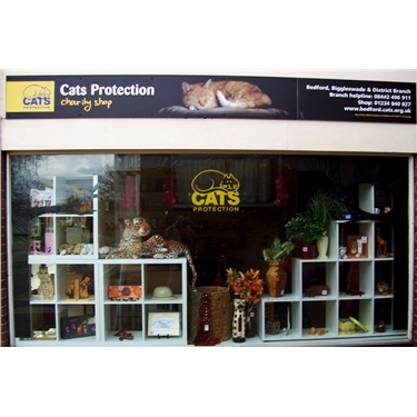 Volunteer for our Kempston shop and raise funds for felines