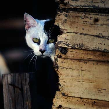 Cats Protection launches advice leaflet on keeping cats safe