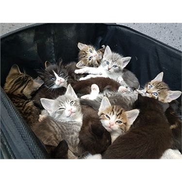 Kittens in suitcase