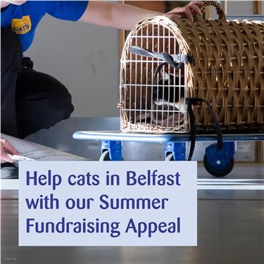 Summer Fundraising Appeal