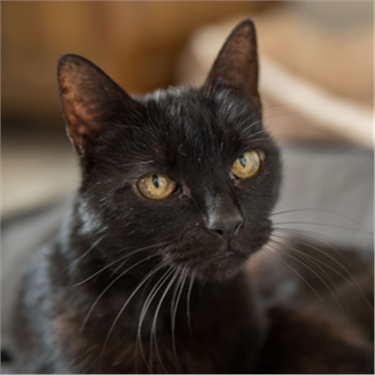 Fifty shades brighter for black cats