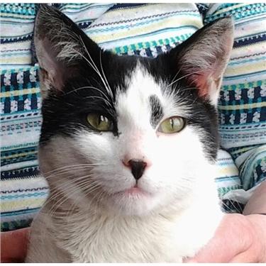 Found Cat - Wombwell