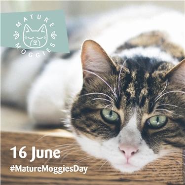 Mature Moggies Day (16 June)