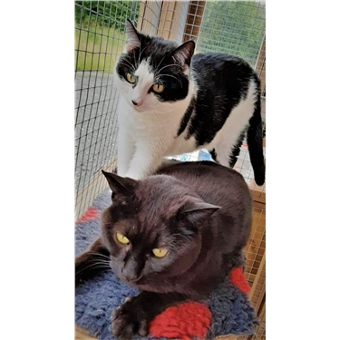 Lock-down Pair Seeking Home Together - Introducing Felix & Dennis