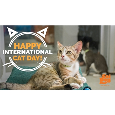 International Cat Day 2019