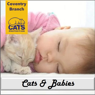 Cat Care: Cats and Babies