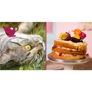 Pawsome Afternoon Tea at Your Place