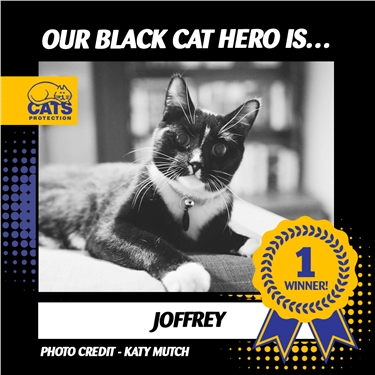 Joffrey crowned heroic winner of National Black Cat Day