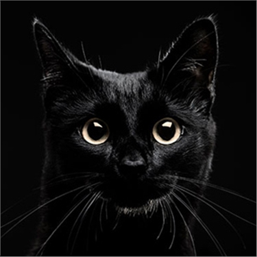 Bigging up black cats on National Black Cat Day