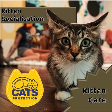 Kitten Care: Socialisation