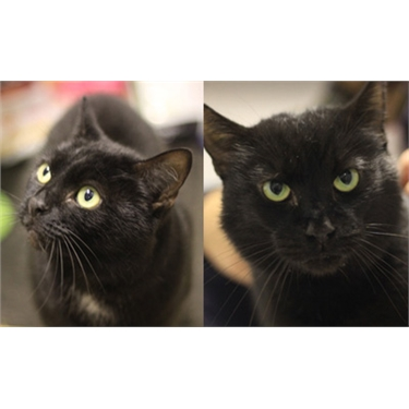 Cats of the Month, November 2017: Mia and Noir