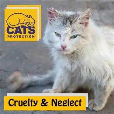 Cruelty and Neglect
