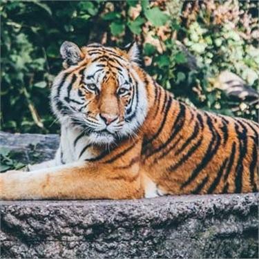 Help support Big Cat Week