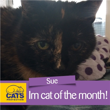 Cat of the month (September)- Sue