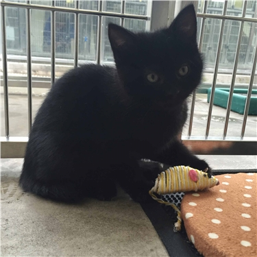 Meet Bellini - the hermaphrodite kitten looking for a new home