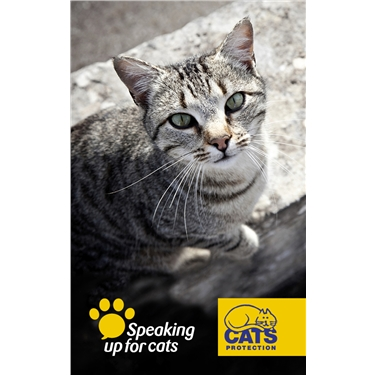 Make microchipping mandatory says cat charity