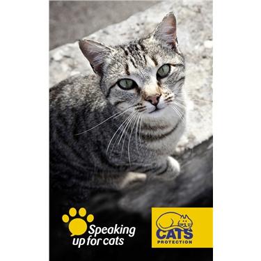 Make microchipping mandatory says cat charity