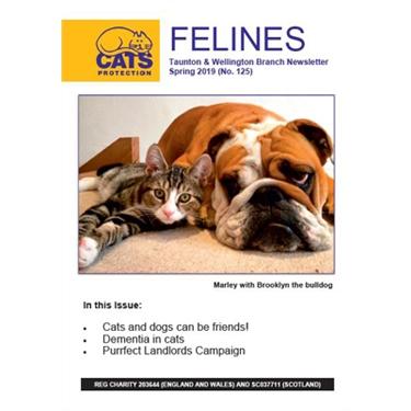 Felines Newsletter Spring 2019