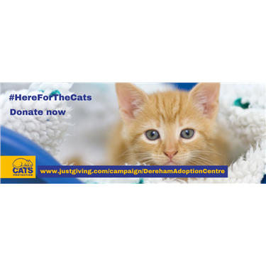 #Here For The Cats at Dereham Adoption Centre