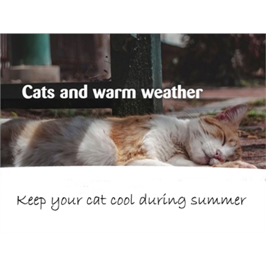 Cats & Warm Weather