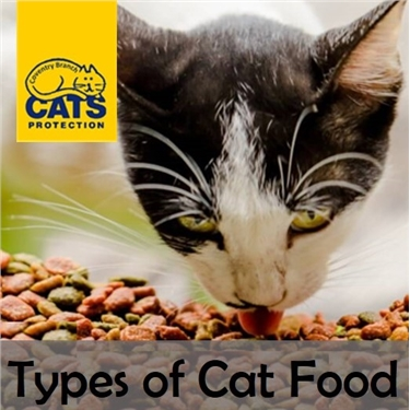 Cat Care: Types of Food