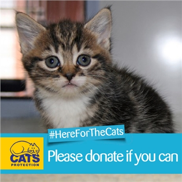 Here For The Cats Appeal