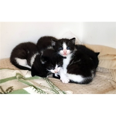 Sadies kittens have now all gone to their forever homes