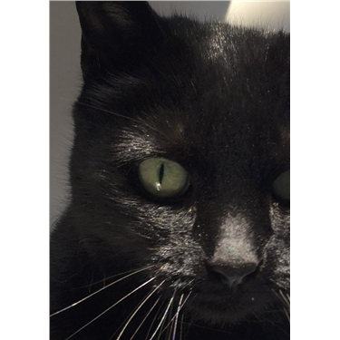 Cat of the Month: Bonna