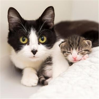 Cute kittens put strain on cat charity