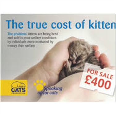 Help change the law to prevent the sale of sick and underage kittens
