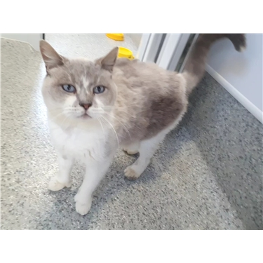 RESERVED: Kitty of the Week - Stanley!