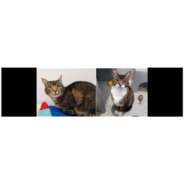 REHOMED - Earl and Missy - Kitties of the Week!