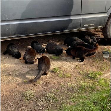 Feral Cats news