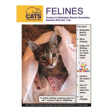 Felines newsletter Summer 2016