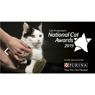 National Cat Awards 2019