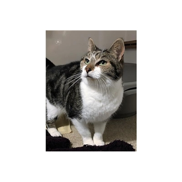 Cat of the Week