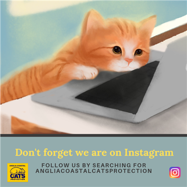 Anglia Coastal Is Now on Instagram