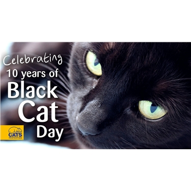 Celebrating 10 Years of Black Cat Day!