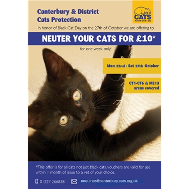 Neuter Your Cat for £10 | 22 - 27 October 2018