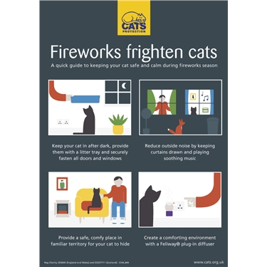 Consider cats in fireworks season