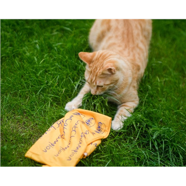 Join the Nine Mile Challenge for Cats Protection