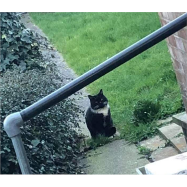 Stray Cat Appeal - We Need YOUR Help!