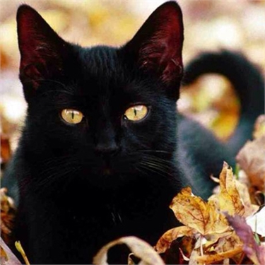 National Black Cat Day 27 October 2017 #blackcatday