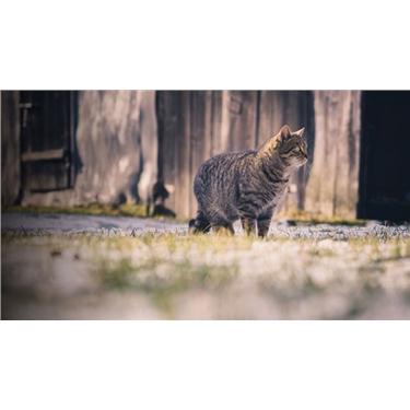 Feral cats and TNR - Trap, Neuter, Return