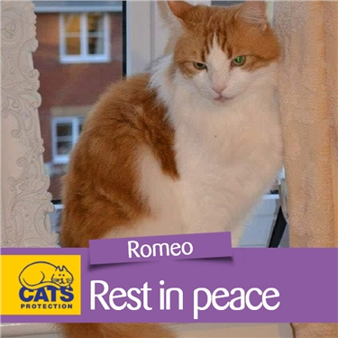 Remembering Romeo