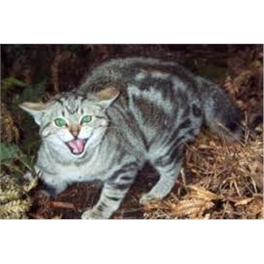 IMPORTANT MESSAGE- Management of feral cats