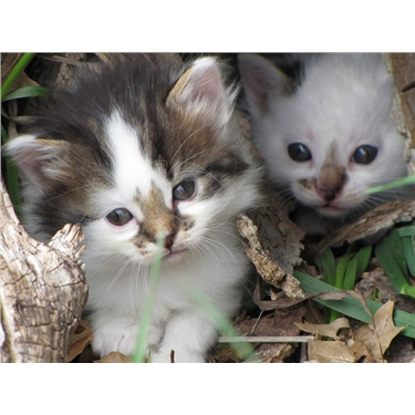 URGENT APPEAL FOR KITTEN/MOTHER CAT FOSTERERS