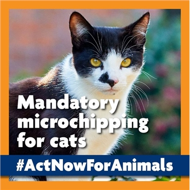 #Act Now for Animals