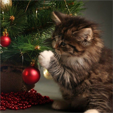 Help keep cats safe at Christmas with these simple steps