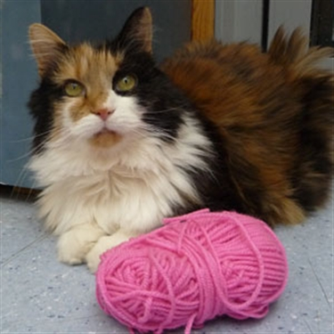 Get crafty for cats at Spring Knitting and Stitching Show